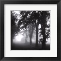 Framed Misty Pathway