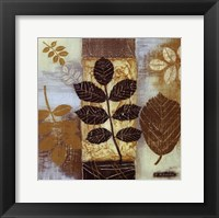 Patterns of Nature II Framed Print
