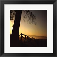 Framed Morning Glory