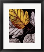 Great Color Framed Print
