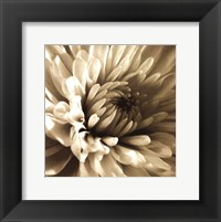 Sepia Bloom I Framed Print