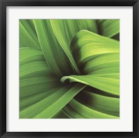 Palm II Framed Print