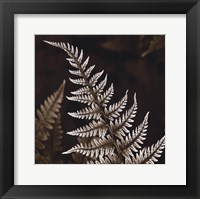 Heathers Feathers Framed Print