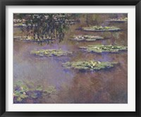 Framed Water Lilies, 1903