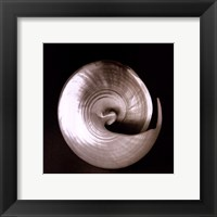 Framed Nautilus II