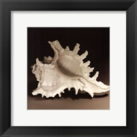 Spiny Shell I Framed Print