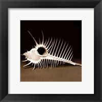 Spiny Shell II Framed Print
