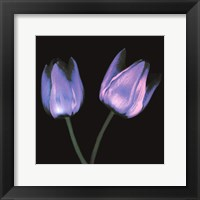 Framed Electric Flowers No.3