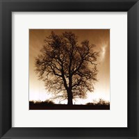 Winter Tree No. 1 Framed Print