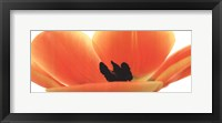 Framed Orange Tulip