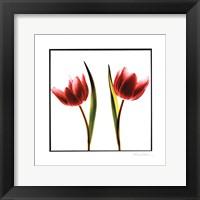 Tulip Impressions II Framed Print