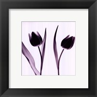 Framed Tulip Impressions IV
