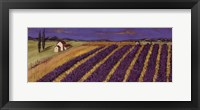 Framed Rows of Lavender