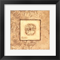 Rose Coral Framed Print