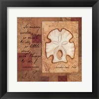 Life - Shell Framed Print
