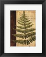 Fern Grotto I Framed Print
