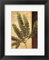 Framed Fern Grotto II