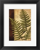 Framed Fern Grotto III