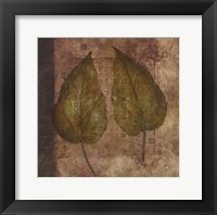 Nature Study 3 Framed Print