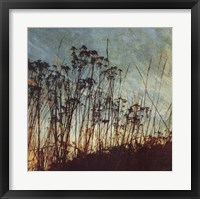 Framed Wild Grass I