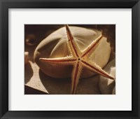 Framed Starfish II