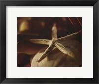 Framed Starfish III