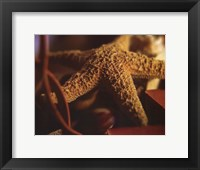 Framed Starfish IV
