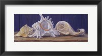 Framed Shells I