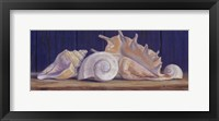 Framed Shells II