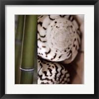 Bamboo I Framed Print