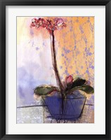 Orchid and Lace II Framed Print