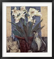 Framed Amaryllis & Cat