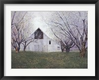 Orchard Blossoms Framed Print