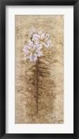 Framed Lily Fair