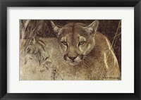 Framed Tropical Cougar
