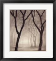 Framed Forest IV