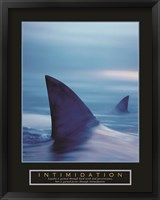 Framed Intimidation - Sharks