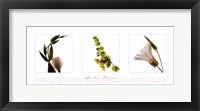 Garden Flowers III Framed Print