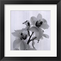 Framed Orchid Spray II