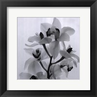 Framed Orchid Spray I