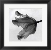 Framed Parrot Tulip II
