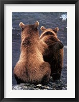 Framed Two Bear Cubs