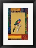 Framed Australian Parrot