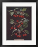 Framed Cherries (B)