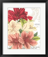 Azalee Jardin II Framed Print