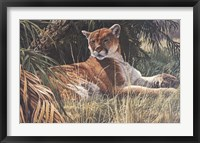 Framed Last Sanctuary- Florida Panther (detail)