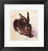 Framed Young Hare
