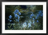 Framed Blue Poppies