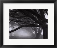 Framed Cypresses, Skyline Drive, South San Francisco, 1996
