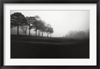 Framed Fog Tree Study III
